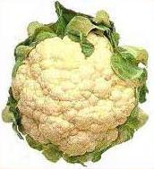 Head of white cauliflower